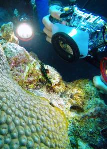 Unterwasser-Shooting